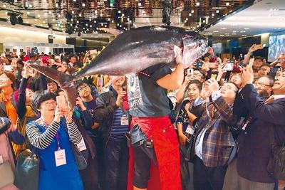 日本近畿大學去年底來台舉辦校友活動,趁機推銷日本養殖黑鮪,吸引大批國內民眾爭相嘗鮮。台灣自2001年開辦黑鮪魚文化觀光季後,黑鮪魚成為最受歡迎的漁產之一,往年主要出口也逐漸轉為內銷,甚至還得進口滿足需求。(黃子明攝)